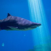 Акула в Palma Aquarium :: Дмитрий Мантуш