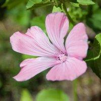 Цветок :: Антон Иванов