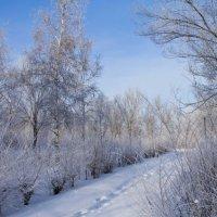 Морозное утро :: Андрей Зарубин