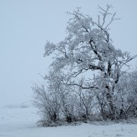 Тяжелый снег :: Юрий Кальченко