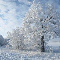 Зимняя сказка :: Юрий Кальченко