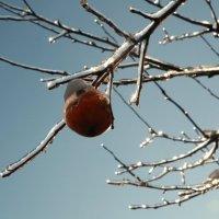 Ледяное яблочко :: Victoria Bryfar