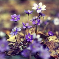 Весна :: Денис Дедков