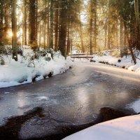 Солнце в лесу :: Екатерина Тумовская