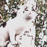 Сказочный кот :: Марина Пырсикова