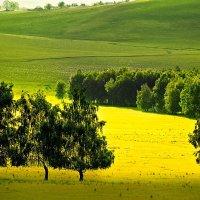 Жёлтая долина! :: Алексей Качурин