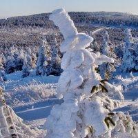 Однажды в морознуюю зимнюю пору... :: tamara *****