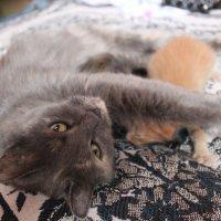 Коши :: Любовь Михалёва