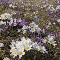 Весна в Хакасии :: Виктор Князев
