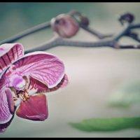 Цветок :: Софья Киселева