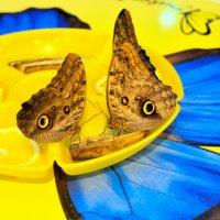 Бабочкин  натюрморт... :: Anatoley Lunov