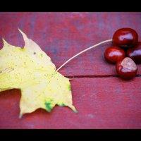 Осень :: Денис Дедков