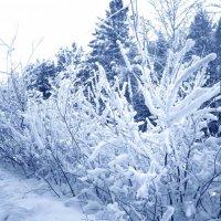 Зимний лес :: Элен Элен