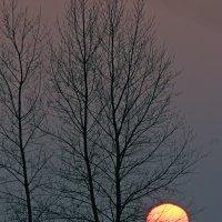 Зимний закат. :: Олег Грачёв
