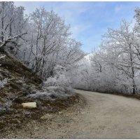 Первый снег - 7 :: Анатолий Дорофеев