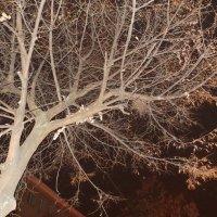 таємниця ночі :: Марія Попіль