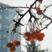 Зима :: Elena Balatskaya