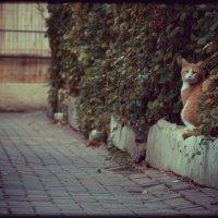 cat :: Pavel Slusar