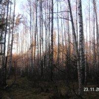 прозрачный лес... :: Леонид Виноградов