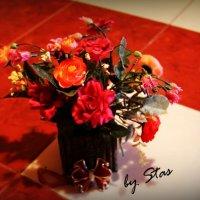 Домашние цветы :: Стас Ткачук