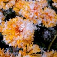 первый снег) :: Мария Лапшина