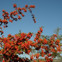 Цветы Испании :: Александр Каменский