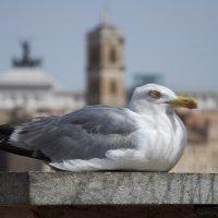Сон римской чайки... :: Sofia Rakitskaia