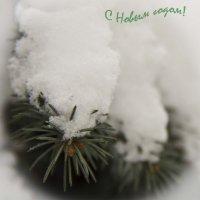 новогодняя открытка :: Камозина Валерия