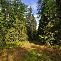 Пейзаж :: Andrey K.