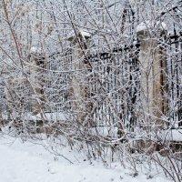 Зимняя ограда.... :: игорь козельцев