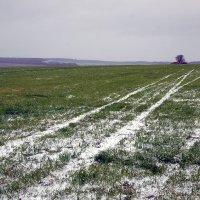 первый снег :: Анастасия Сесорова