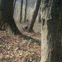 ліс на весні :: Марія Попіль