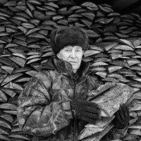 Сколько их  наколото :: Геннадий Тарасков