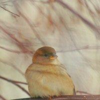 гордая птичка) :: Евгения Чернявская