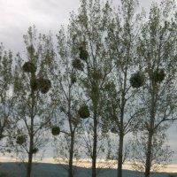 vecer v pole :: natalia cojoharenco