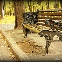 Осень в парке :: Евгений Жиляев