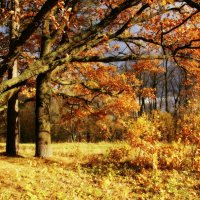 Золотая осень :: Евгений Жиляев