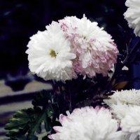 Цветы :: Саша Скейтер
