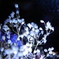 цветы :: Мария Шумаева