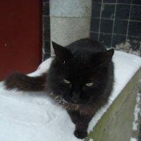 Кіт сам по собі :: Марія Попіль