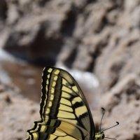 Бабочка :: Ирина Данилова