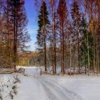я из лесу вышел...© :: Павел Преснов