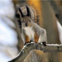Я этому соседу с большими ушами  хвостик ПОПРАВЛЮ... :: Anatoley Lunov