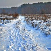 Зимняя дорожка :: Сергей Рудницкий