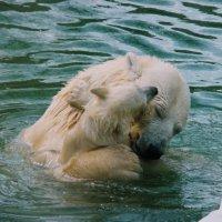 А говорят животные не разумны... :: Дмитрий Бубер