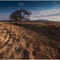 Травы - муравы :: Дмитрий Рудаков
