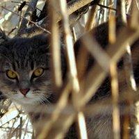кошка :: Вячеслав Завражнов