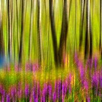 Весна :: Владимир Ноздрачев