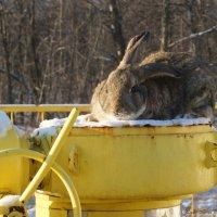 Привет тебе,природный газ!!! :: Ирина Дегтярева