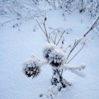 Холодно :: Владимир Буравкин
